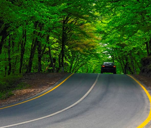 Car with AAA Roadside Assistance drives through a green forest road