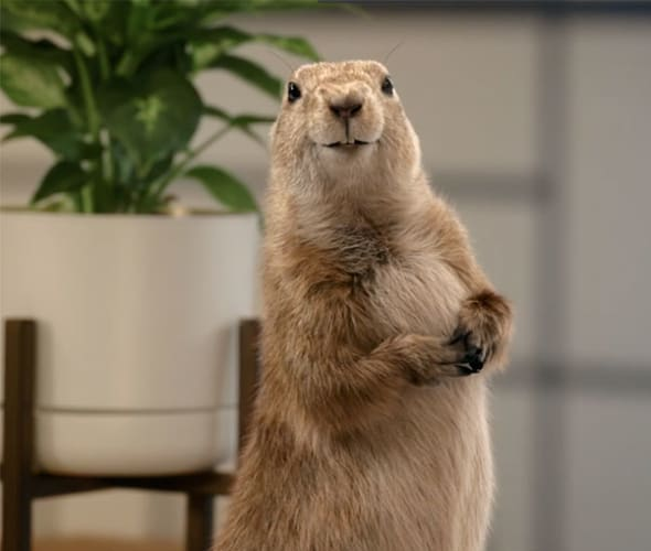 a screenshot from the AAA Insurance video,  Gopher.