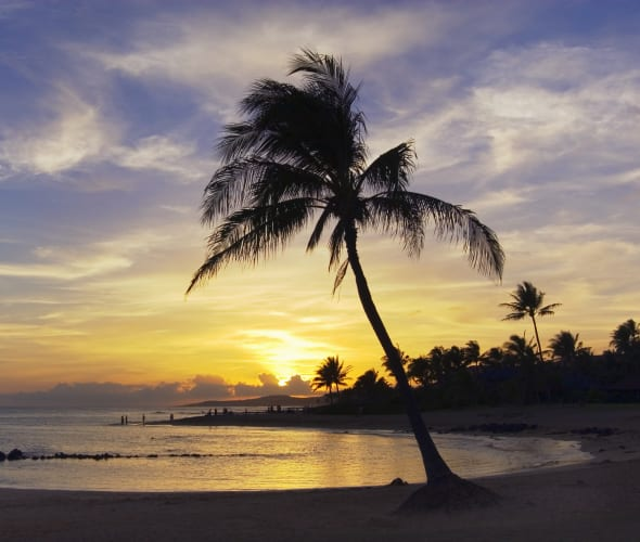 leaning waterside palm on Kauai's Poipu Beach by Nukumoi Point, Hawaii.