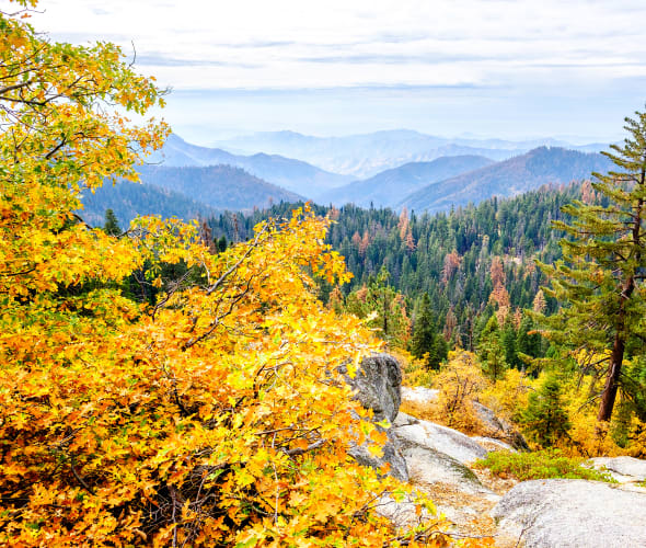 Fall colors in Sequoia National Park.