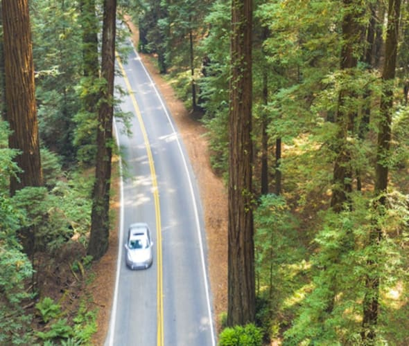 Car covered by AAA car insurance driving on a redwood-lined road in California