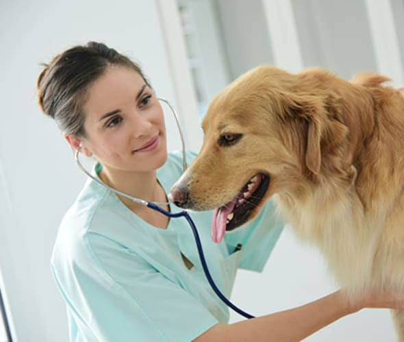a vet examines a dog insured with pet insurance purchased with a AAA discount