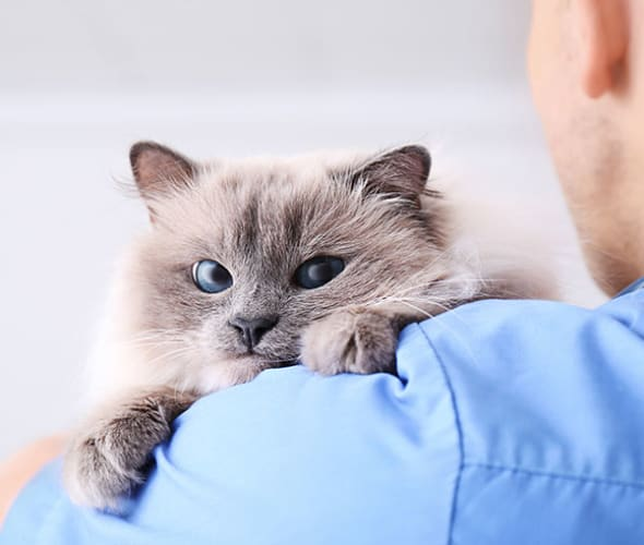 a vet holds a cat covered by Embrace pet insurance from AAA