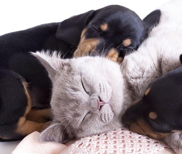 Two puppies and a cat covered by pet insurance from AAA