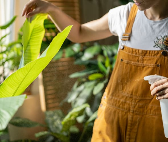A woman mists the leaves of a tropical houseplant.