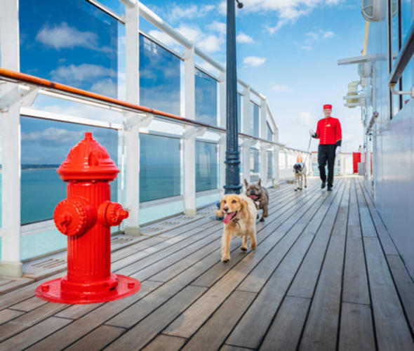 cruise deals include transatlantic crossings on cunard ships where pets are welcome