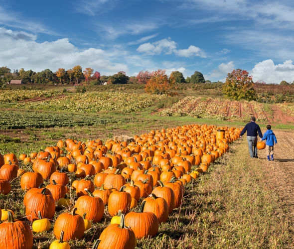 AAA Members pick out a pumpkin.