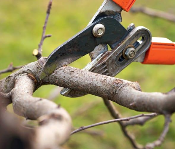 A person trims a shrub in the fall.