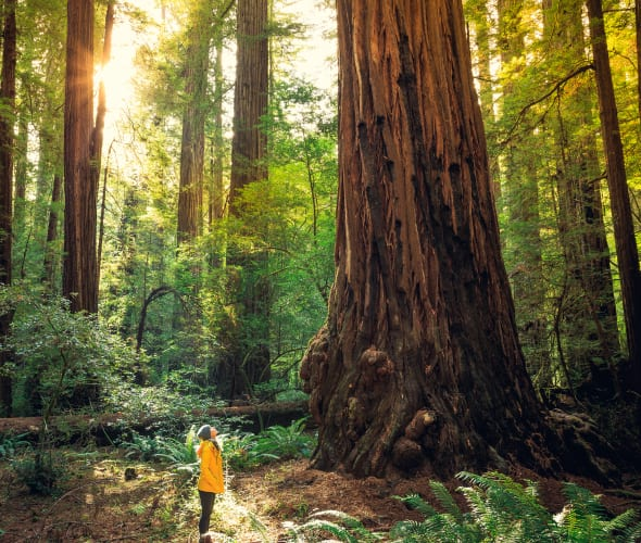 A woman hikes in Redwood National and State Park.